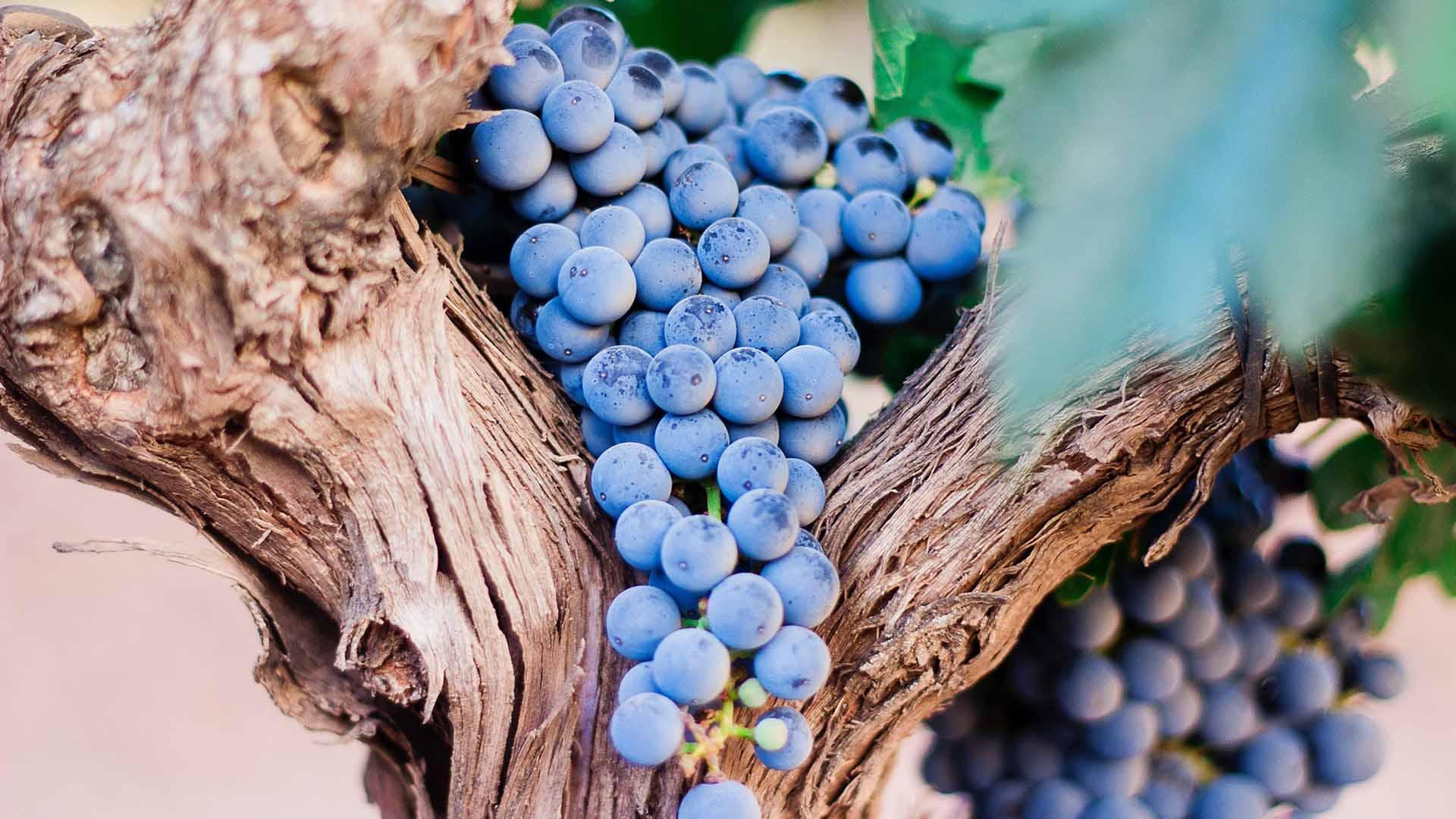 Ribeira Collection Hotel - Arcos de Valdevez - O Sabor da Região - Degustação Vinhos